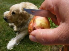 Petrezselymes újkrumpli - Egy kis késsel kapard le a krumpli héját!