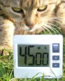 Sör-rolád - Állítsd be az időzítőórát 45 percre!