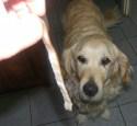 Bakonyi betyárleves - A szalonnabőrt add a kutyának!