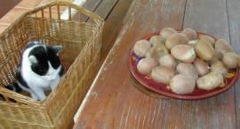 Rakott krumpli - A főtt krumplit tedd szellős helyre, hogy kihűljön!