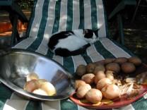 Dinsztelt krumpli - Húzd le a krumplik héját!