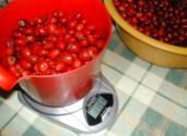 Csipkelekvár - Az első kiló megtisztított csipkebogyó.