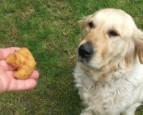 Rántott karfiol - A kutya is szereti!