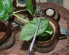 Citromfű-tea - Vagdosd a bögre fűtartójába!