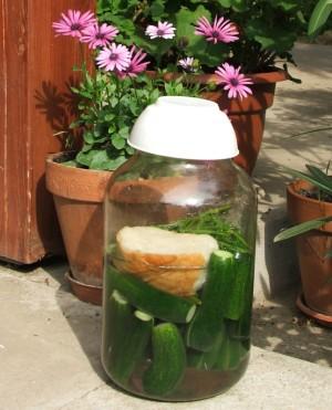Kovászos uborka - Az üvegbe rakott uborkát napra tesszük