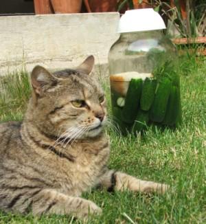 Kovászos uborka - Tedd napos helyre az üveget!